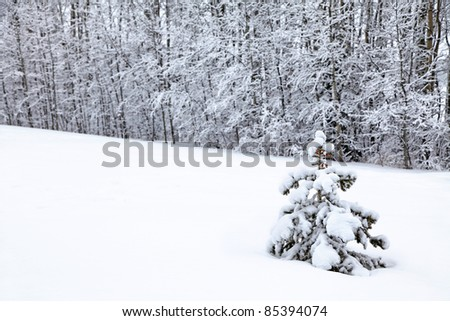 A small spruce tree in a field of snow in the winter landscape. - stock photo