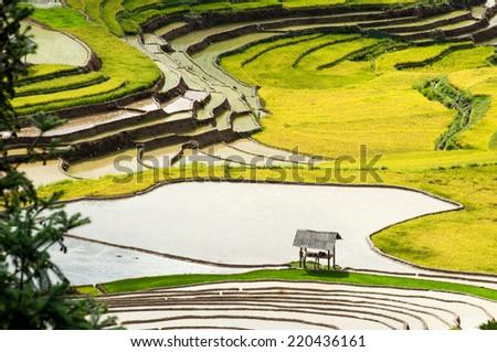 A small tent  in terraced rice field in water season in Mu Cang Chai, Yen Bai province, Vietnam  - stock photo