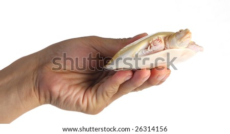 a small tortoise held in hand
