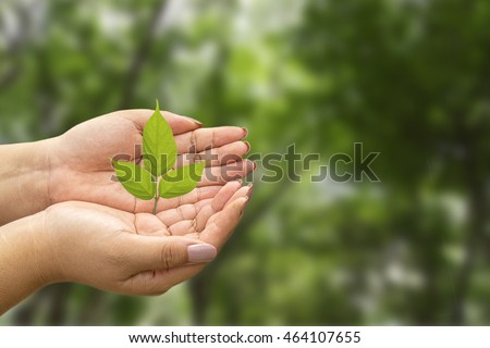 A small tree in hands and green background