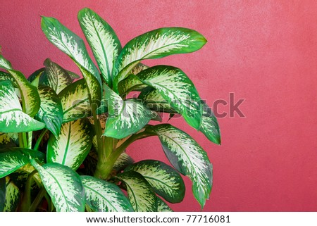 A small tree next to the red wall - stock photo