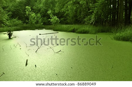 a small vibrant green tarn overgrown with duckweed at the edge of a forest in Southern Germany at summer time - stock photo