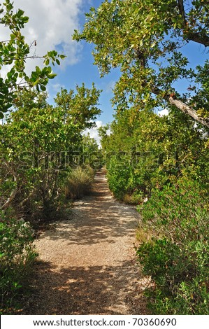 A small walking trail in between tropical plants in Biscayne National Park, Florida