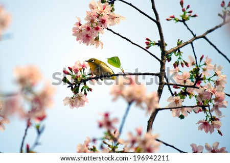 A small yellow bird sits on the branch of a blossoming tree. - stock photo