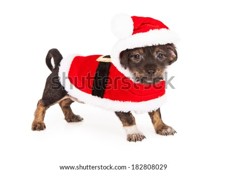 A small young puppy wearing a red Santa Claus Christmas outfit - stock photo