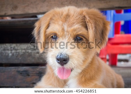 A smile brown fur dog looking at the front while sticking out its tongue out with wood as background (focus at dog's face) - stock photo