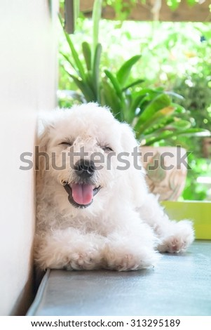 A smile of happy dog