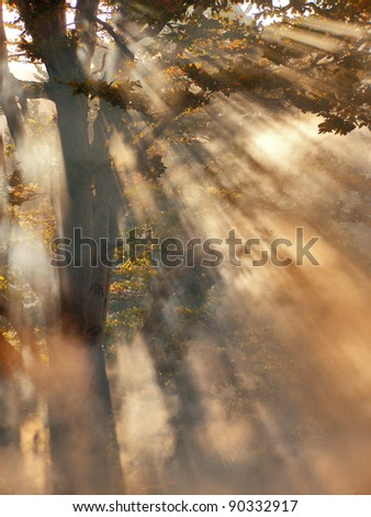 A smoke coming from a forest fire - stock photo