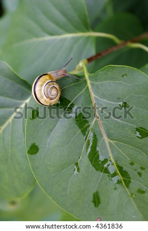 A snail is on his way to the edge - stock photo