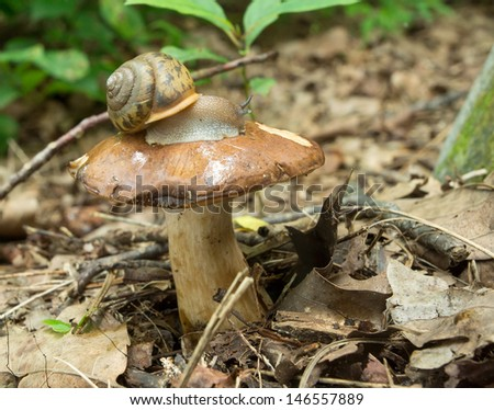 A snail on a mushroom nipple - stock photo