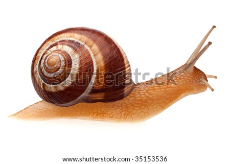 A snail that is running on a white background - stock photo