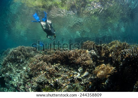 A snorkeler drifts above the edge of a coral reef in Raja Ampat, Indonesia. This region is known as the heart of the Coral Triangle and contains more marine life than anywhere else on Earth.