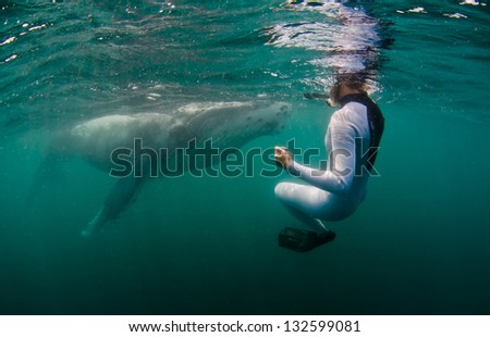 A snorkeler encounters a huge humpback whale calf in the Indian Ocean - stock photo