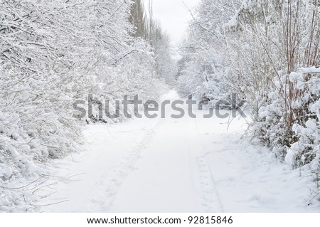 A snow covered forest - stock photo