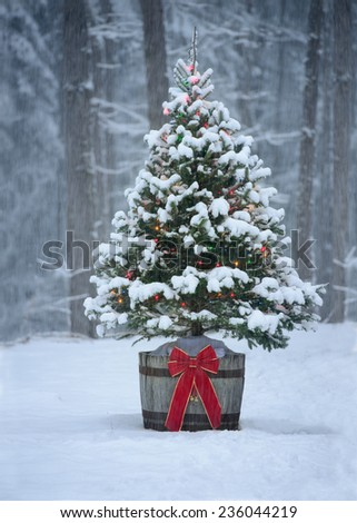 A snow covered natural spruce Christmas tree with illuminated colorful lights outdoors in an old aged wine barrel during a snowfall in the forest. Winter season.  - stock photo