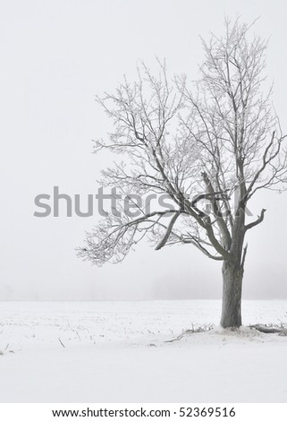 A snow-covered tree set against an icy fog background.