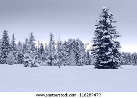 A snowy, cool toned winter landscape that combines beauty with cold. - stock photo