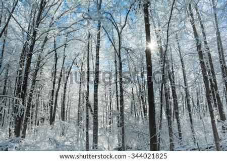 A snowy winter forest scene with the snow clinging to the trees and a beautiful bright blue sky. - stock photo