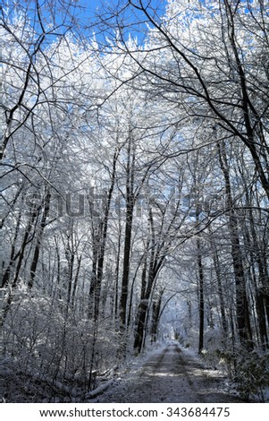 A snowy winter scene along a path with the snow clinging to the trees and a bright blue sky. - stock photo