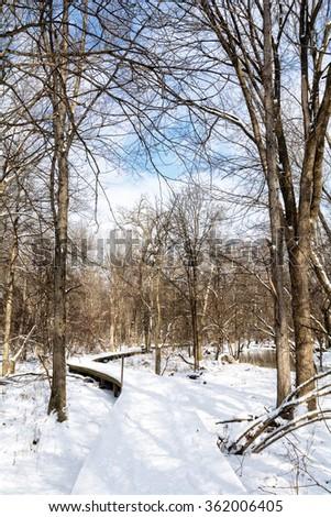 A snowy winter scene along a winding wooden boardwalk trail in Toledo Ohio. - stock photo
