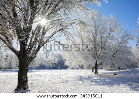 A snowy winter scene along in a park with the snow clinging to the trees and the sun shining through the trees.