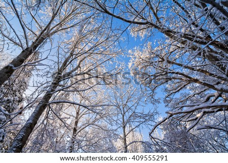 A snowy winter scene with the snow clinging to the trees against a beautiful blue sky. - stock photo
