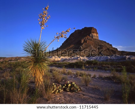A soaptree yucca plant and Castelon Peak in Big Bend National Park, Texas. - stock photo