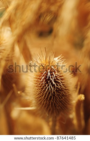A soft neutral abstract background of a seed head macro - stock photo