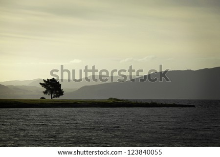 A solitary tree, almost becoming duo-toned in the sunset in Lake Taupo, New Zealand. - stock photo