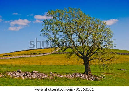 A solitary tree on a rural farming background - stock photo
