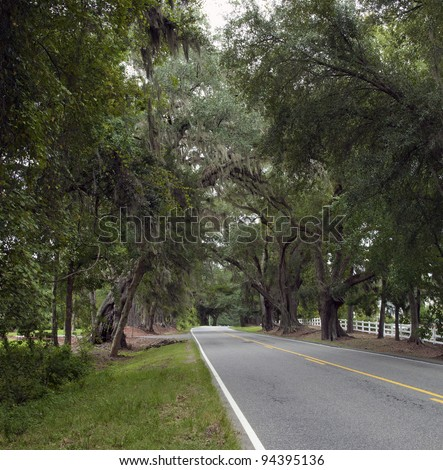 A South Carolina highway winds through the trees near Charleston. - stock photo