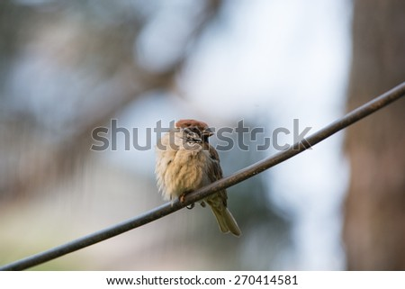 A sparrow stand on electric wire - stock photo