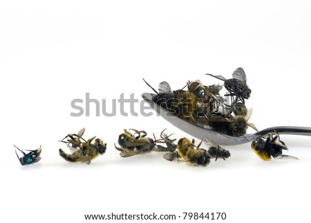 A special kind of food: flies on a spoon - stock photo