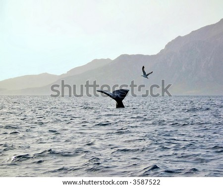 A spermwhale in the Strait of Gibraltar in front of the Atlas mountains - stock photo