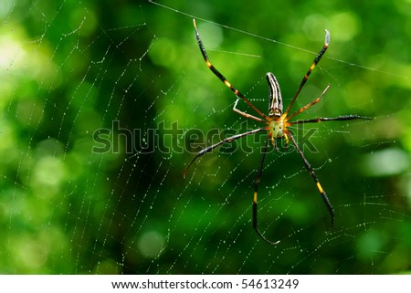 A spider in the forest And the fiber is gold