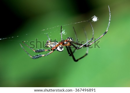 A spider on web