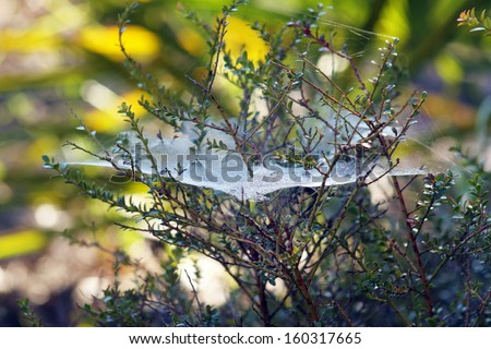 A spider web outdoors, covered with morning dew. - stock photo