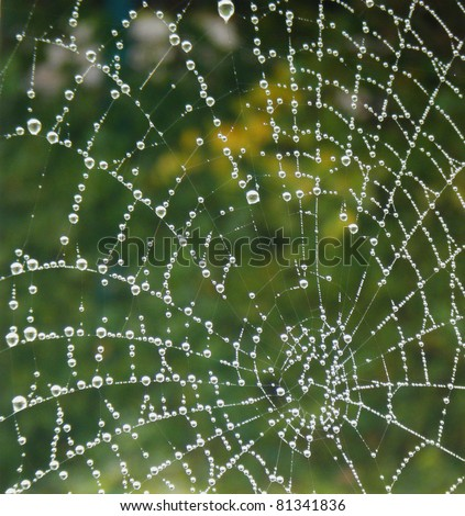a spider web with some water droplets early in the morning - stock photo
