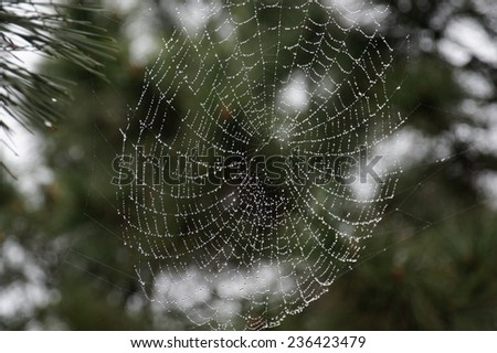 a spider web with some water droplets early in the morning after rain - stock photo