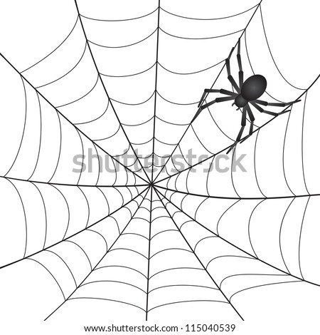 A Spiderweb with Spider on white background.
