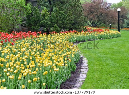 A splash of  red and yellow colored tulips cover a park area during the Spring Festival in Ottawa, Canada. - stock photo
