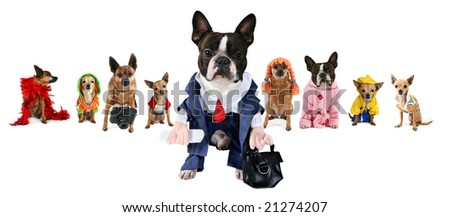 a spoof on the busniess images but with dogs - stock photo