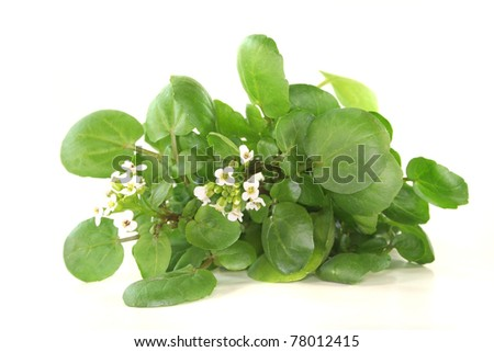 a sprig of fresh watercress on white background