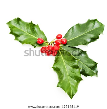 A sprig of green holly with red berries. - stock photo