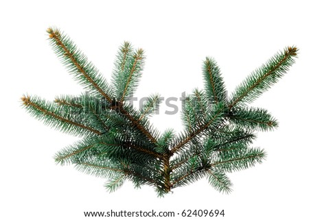 A sprig of pine, isolated on a white background. Use alone or add your own decorations. Or duplicate and string together to make your own garland! - stock photo
