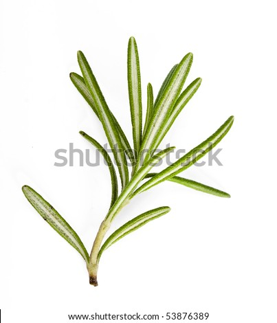 A sprig rosemary herb isolated on white background - stock photo