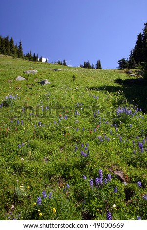 A spring alpine view from hiking trail.