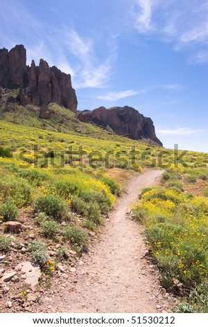 A spring day in the desert of Arizona with lots of yellow, blooming flowers. - stock photo