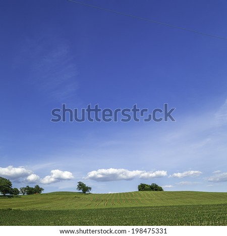 A spring field with young plants, blue sky, white clouds, and trees - stock photo