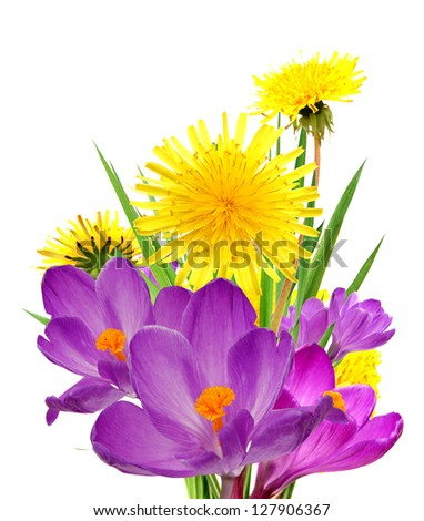 A spring flowers in Dandelion and Crocus
